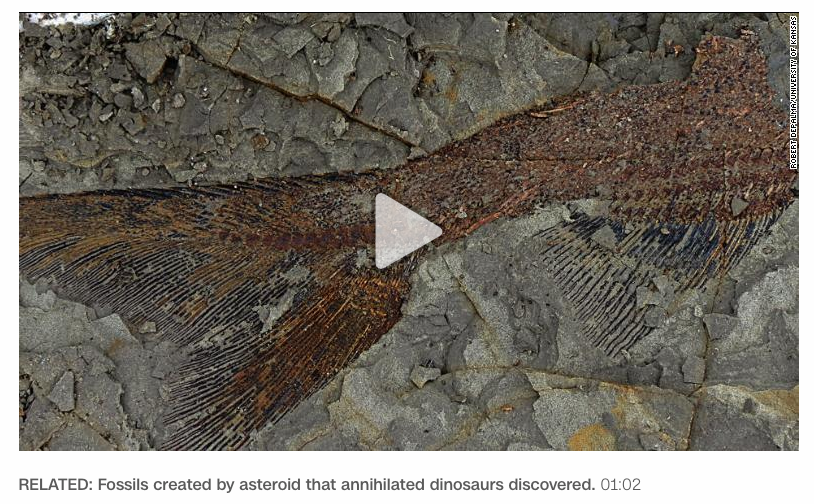 "test Twitter Media - What the dinosaurs discovered: …despite being annihilated, no less — from ""A meteor from another solar system may have hit Earth, and the implications are fascinating"", CNN 4/17/2019: [h/t Bob Shackleton] https://t.co/XrrBIuRddw https://t.co/nEEc5ANMaq"