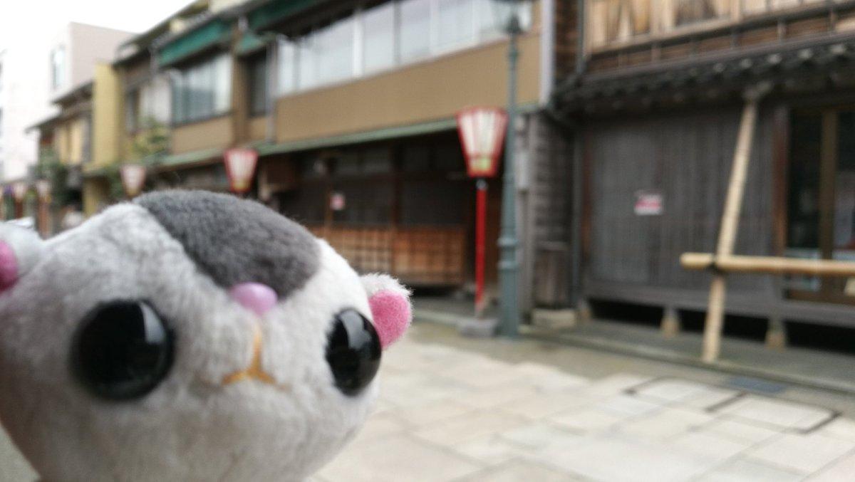 test ツイッターメディア - 西茶屋町ー 行けれないと思ってた甘納豆かわむらに行けた✨買ったのは羊羮だけどwww https://t.co/k2RJVqfyYo