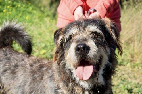 💕😘🐾😍Cimarrón #adoptMe  https://t.co/5wflUOGJhG  #AdoptDontShop #adoptdogs #dogsofspain #dogs https://t.co/stBeZbLwqW