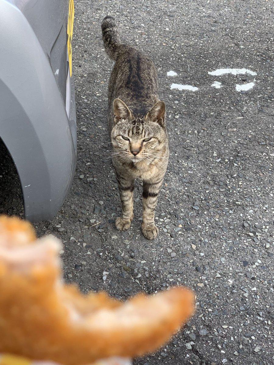 test ツイッターメディア - ファミチキ食ってたら野良猫が睨んできた😒 https://t.co/MTsqZQbAjI