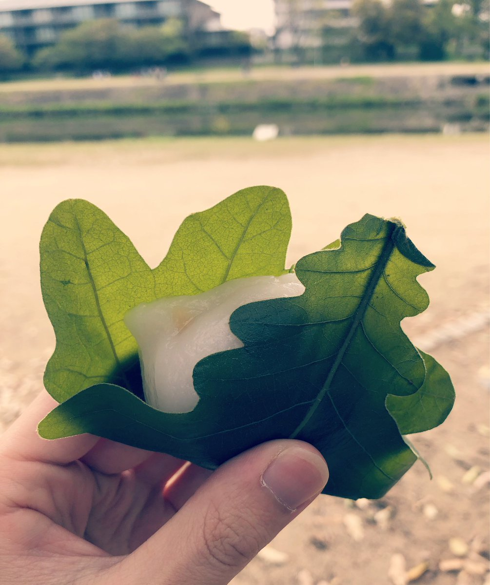 test ツイッターメディア - 京都にある有名な和菓子屋さん「出町 ふたば」 豆餅も有名だけど今日は柏餅。  白みそと白あんをベースに炊き上げられた特製のみそあん入り。  いい匂いのする柏葉と、濃厚なみそあん... とても美味しかったです。  京都に来たときは是非!! https://t.co/VrBBlNUdP5