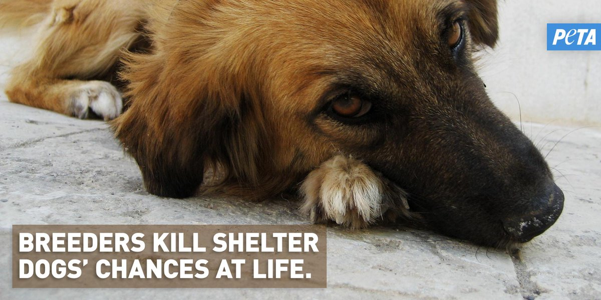 RT @peta: Every puppy bought from a breeder or pet store means one fewer home available for a dog in a shelter ???? https://t.co/Agk5Zbv8N2