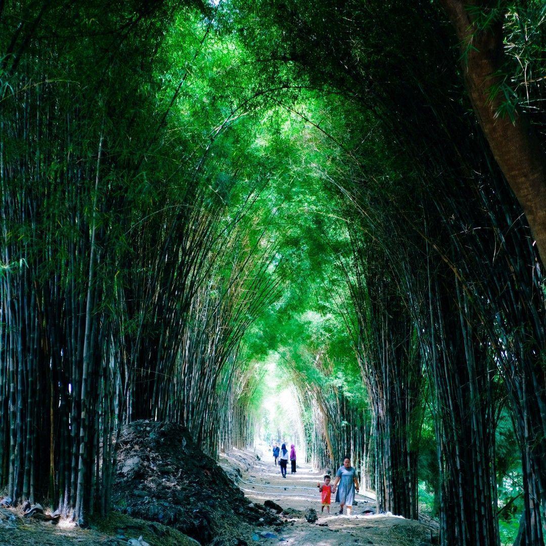 Such a beautiful bamboo forest in Indonesia...   https://t.co/ZsBZjzjVhv https://t.co/lzu6A36l5H