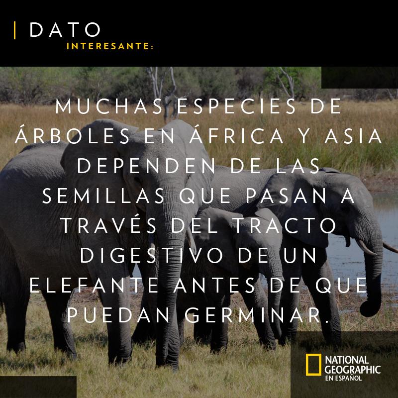 ¿Sabías este dato asombroso sobre los elefantes? #FelizJueves https://t.co/75Jm5JOGYO