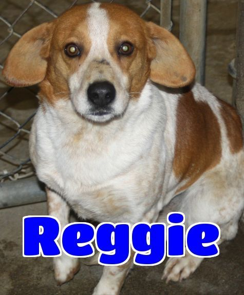 RT @cutepetslex: Hello! I'm #94 reggie -sponsored. I am a male beagle. https://t.co/GYwqGxyum0 https://t.co/lz0f2sktq2