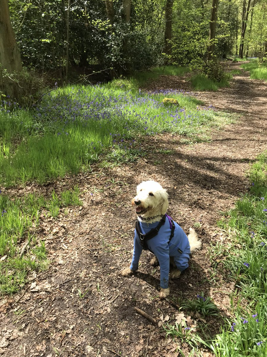 test Twitter Media - Daisy enjoying Hay Wood.🐾🐾🐾 https://t.co/GBoNK5vcL2