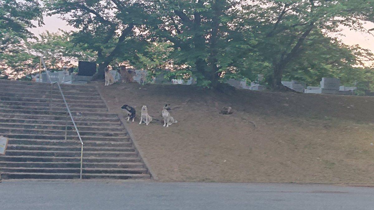 野良犬 放し飼い ド田舎 サファリ スラムに関連した画像-02