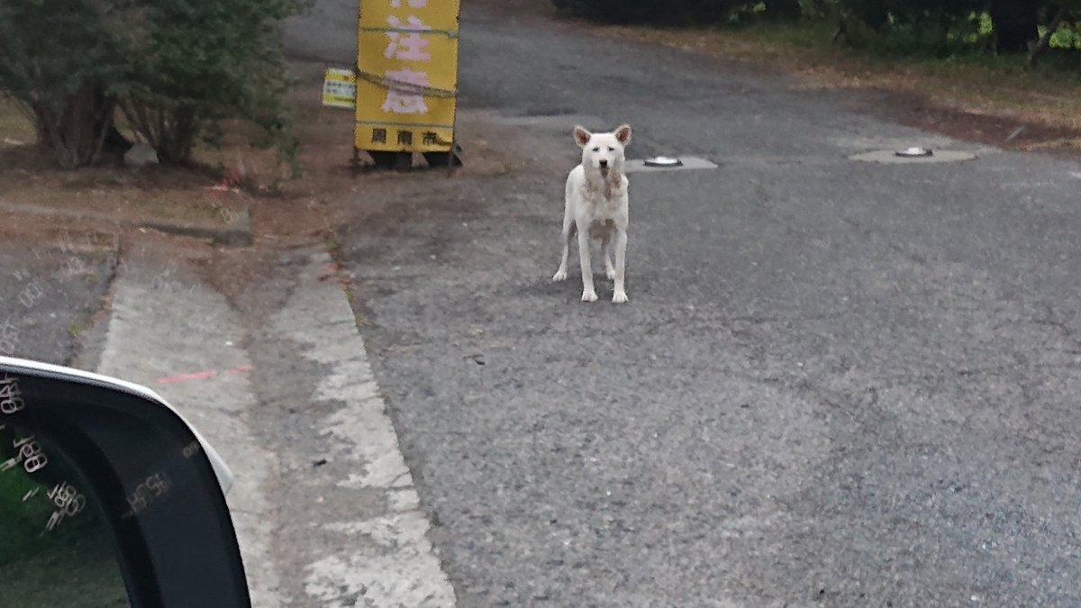 野良犬 放し飼い ド田舎 サファリ スラムに関連した画像-04