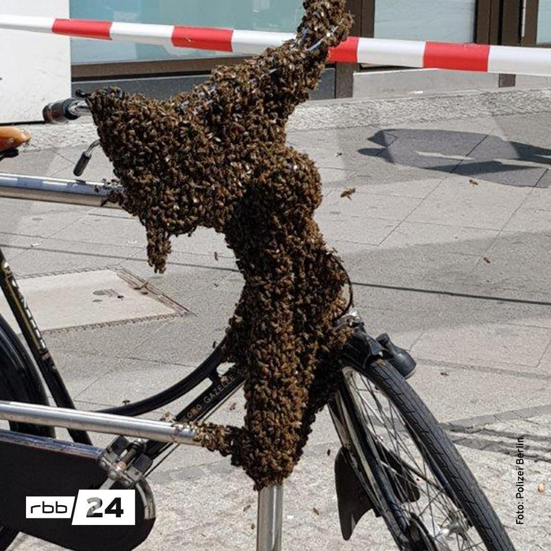 RT @rbb24: Hunderte #Bienen haben heute in Berlin gegen die StVO verstoßen. Foto: @polizeiberlin #Charlottenburg https://t.co/6vbcTuMhFd