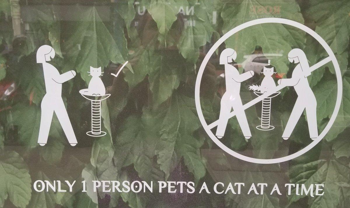 test Twitter Media - London says: No cat threesomes. https://t.co/c1DJaruuHu