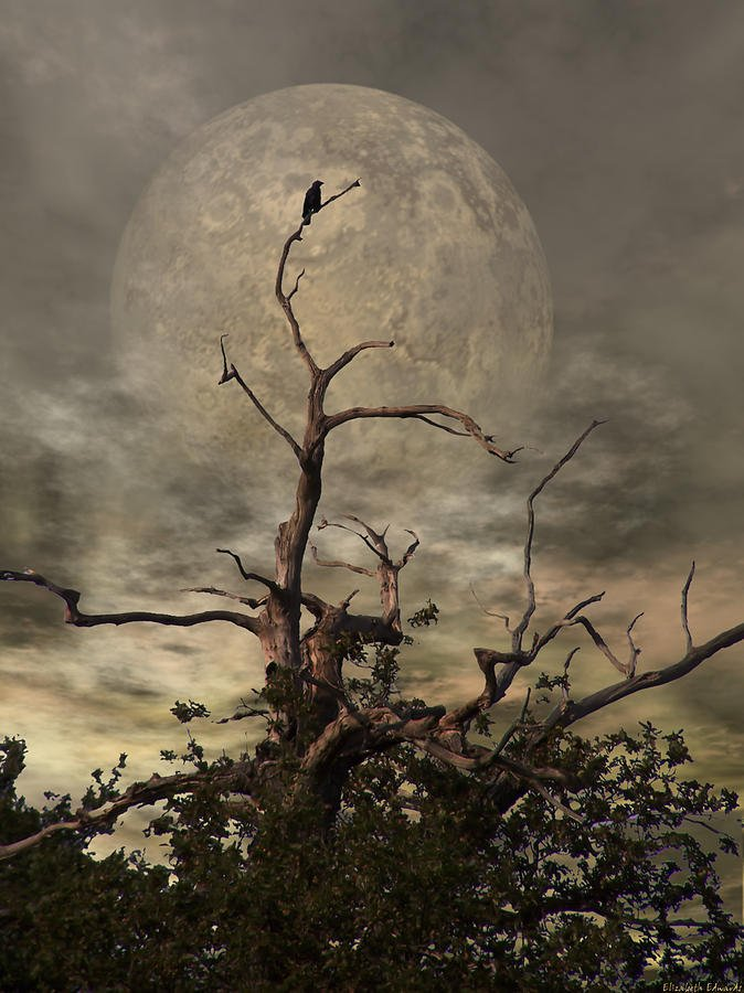 Hesitant fingers of light reaching across  a softly resilient Moonglow Fractured breath drawn from clouds of light Sentimental and frozen a calling blackbird dawn.  #NatureVerse 163 ~Art~ Abbie Shores https://t.co/dxOtRjh6s0