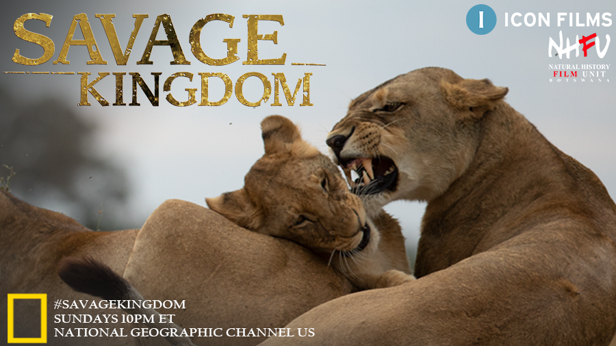 Forget #GameOfThrones - this is the show down you can't miss! Tune into the @NatGeoChannel USA tonight at 10pm and find out who takes the throne in the final episode of #SavageKingdom season 3 https://t.co/JJDyzGJ6R0