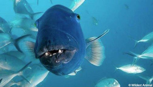 #FishyFriday mood 🐟🐟 https://t.co/D6vavzPOcK