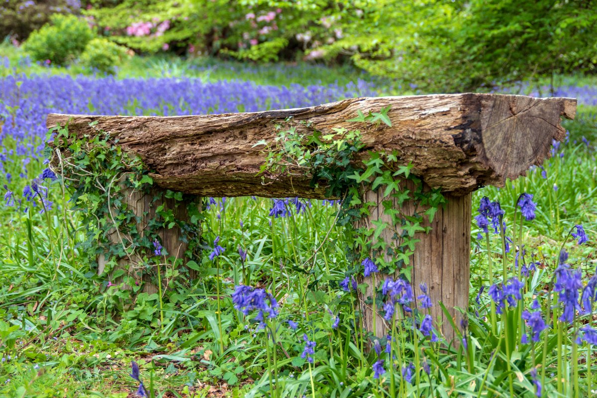 test Twitter Media - Bluebells still looking magnificent and carpeting large areas of Lukesland Gardens, near #Ivybridge. #Bluebells #Photography #VisitIvybridge #Devon  @Lukeslandgarden @DevonLife https://t.co/cquUDNYGLV