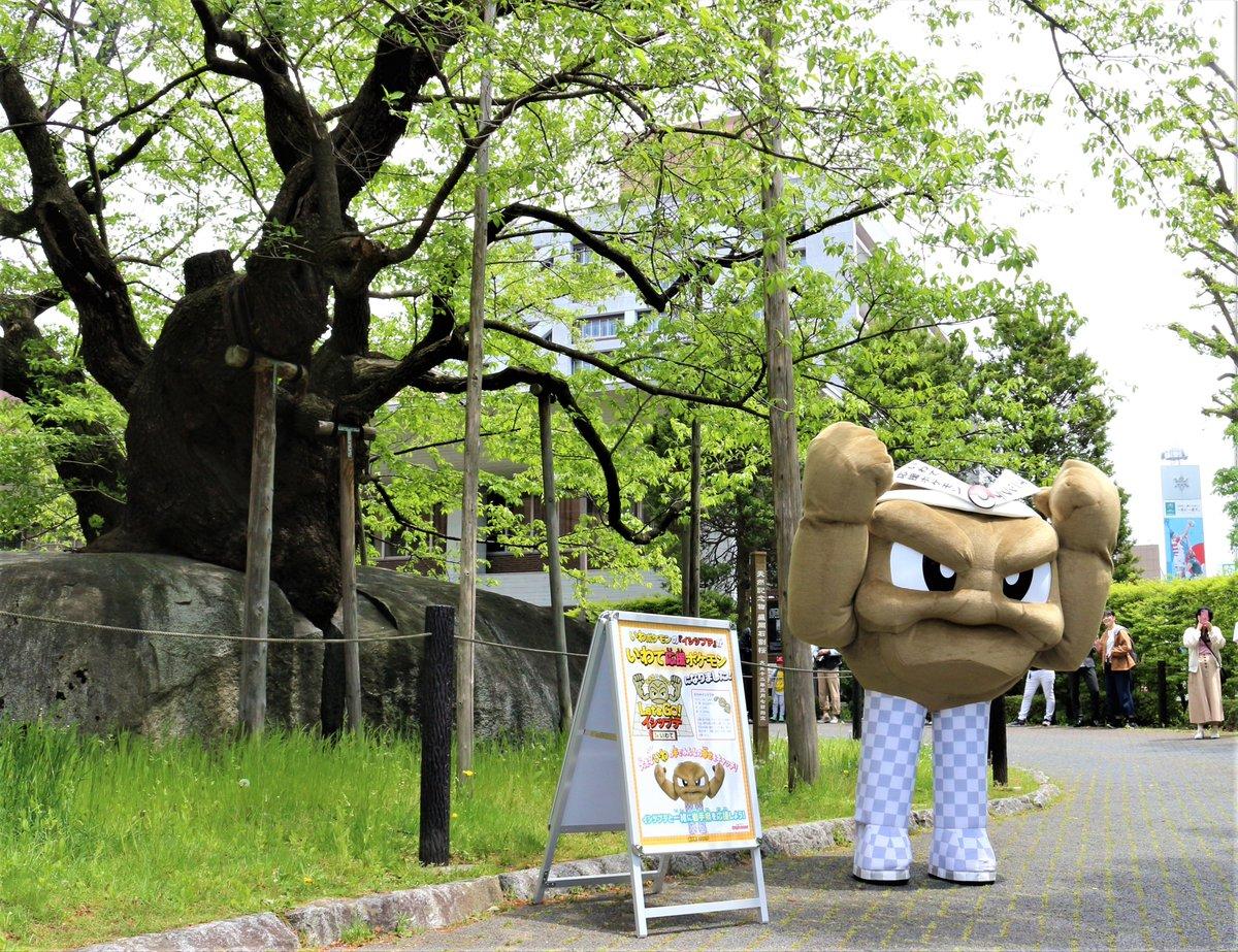 キモヨ イシツブテ ポケモン 市松模様 草に関連した画像-01