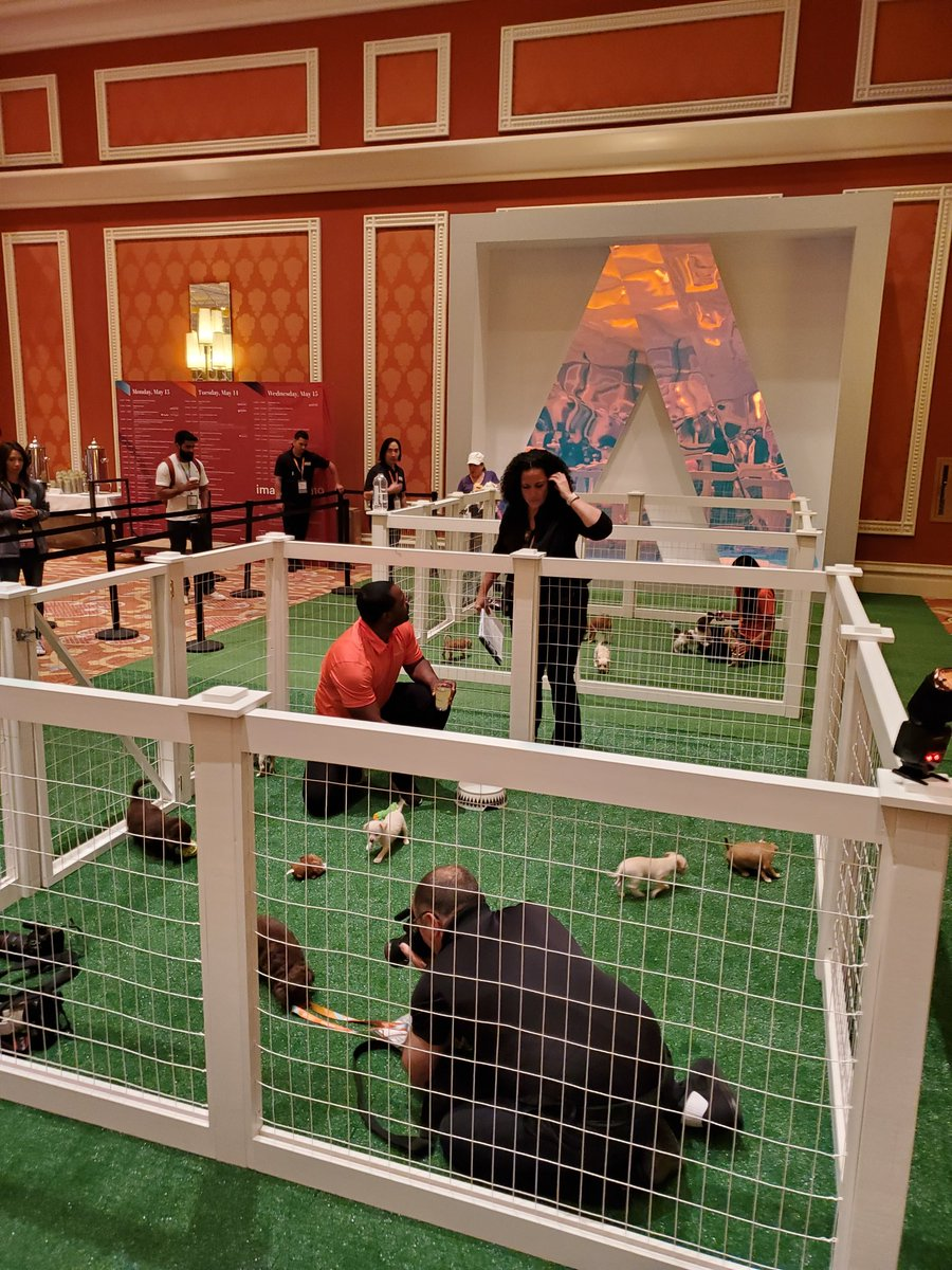 mattz_mg: The puppies are warming up for their Imagine debut.  #MagentoImagine https://t.co/GOLs9DpNPL