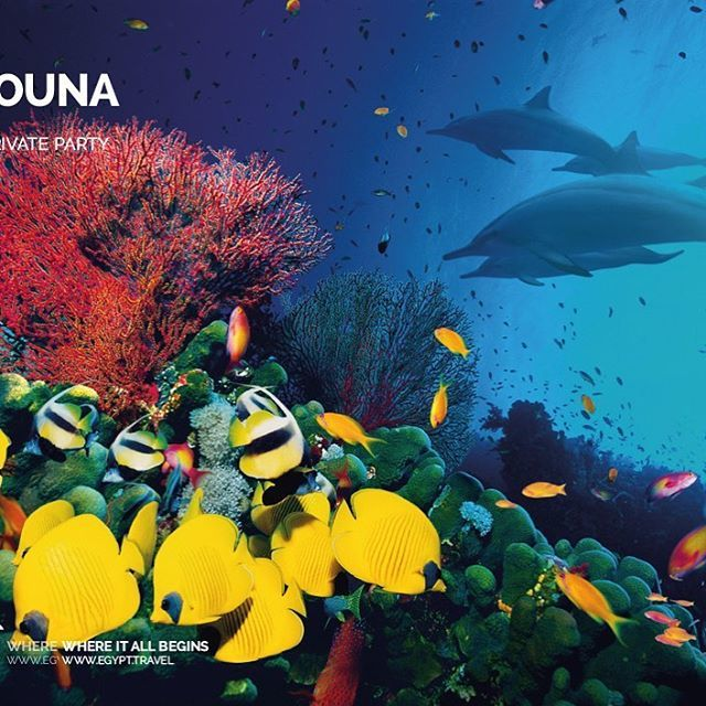 EL GOUNA  AN HOUR AWAY BY BOAT from the Red Sea's famous wreck haven of Abu Nuhas and a world away from the bustle of Egypt's major underwater tourist hotspots, El Gouna offers an excellent mix of a mellow atmosphere with serious diving.  To read the full feature, visit our … https://t.co/Nozf3Mo2dr