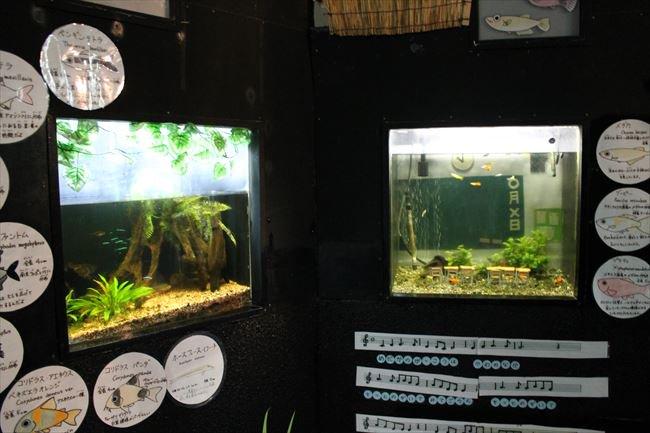 test ツイッターメディア - 無くなった水族館を思い出す、その1。 犬吠埼マリンパーク。2015年11月21日撮影。2018年1月31日閉館。 行った時に昭和にタイムスリップしたかの水族館でした。5年以内に無くなりそうと思ったら結果5年ももたなかった。 一部生き物が取り残されたままで問題になってました。複雑です。 https://t.co/v6UCtvxMBn