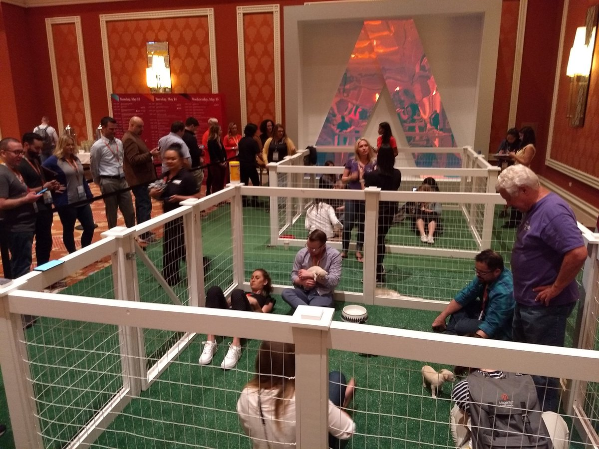 aleron75: They are are arrived! Puppies at #MagentoImagine https://t.co/AwnHTWOA7x