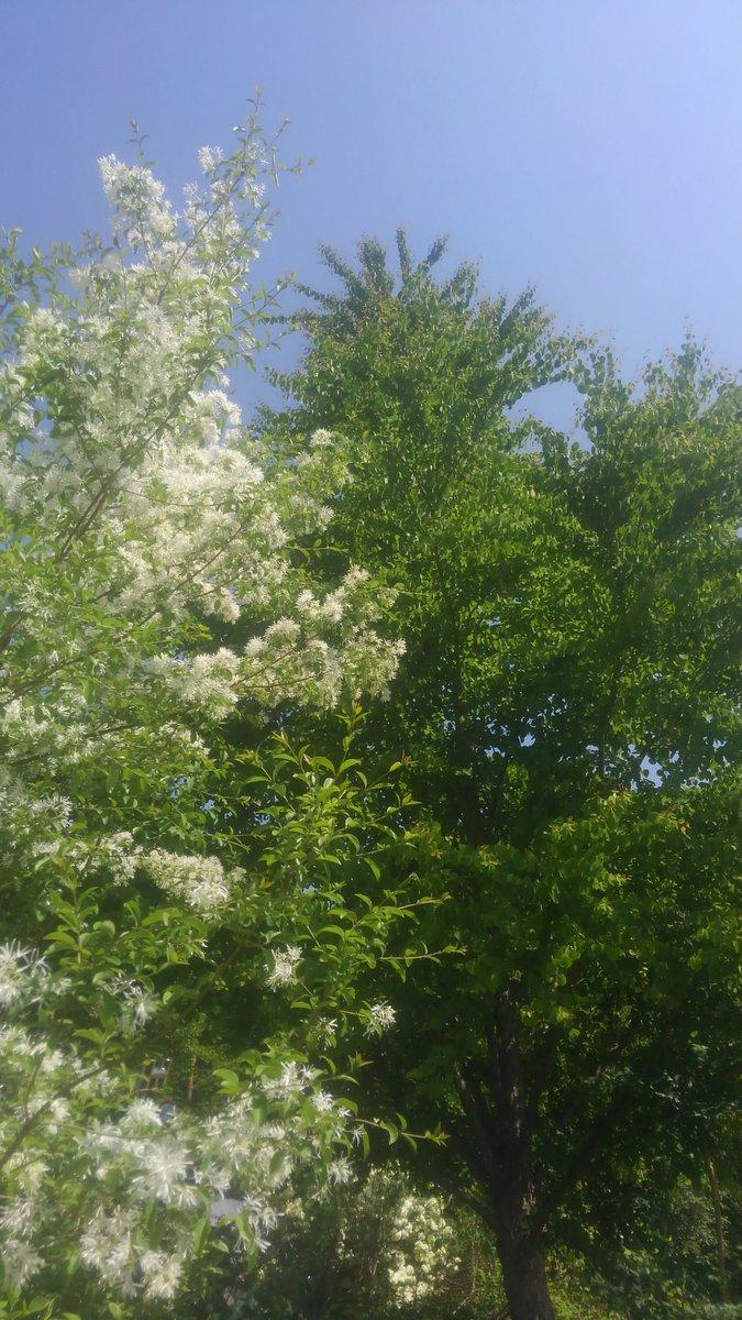 今日は八ヶ岳でラーメンを。。。 ではなく庭を造ります👴 #戦う植木屋  #樹慶