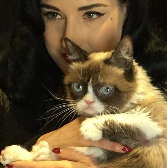 Awwwww Rest In Peace, dear little @RealGrumpyCat ???? I was more star struck over meeting you than just about anyone! https://t.co/GzMTNkTjcf