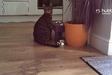 Cat burglar update: Zero f**ks given.   If he could stick his middle finger up at the camera - he would. https://t.co/mnXDY00Z9G