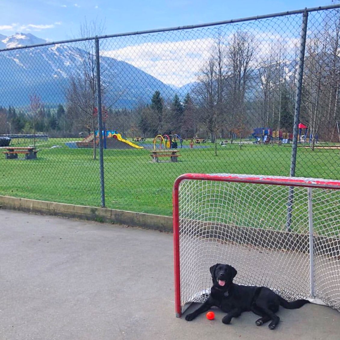test Twitter Media - Happiness is a #longweekend and a friend in net. Make the most of it, get out and play, 🇨🇦! https://t.co/Xxu8PQXqrO