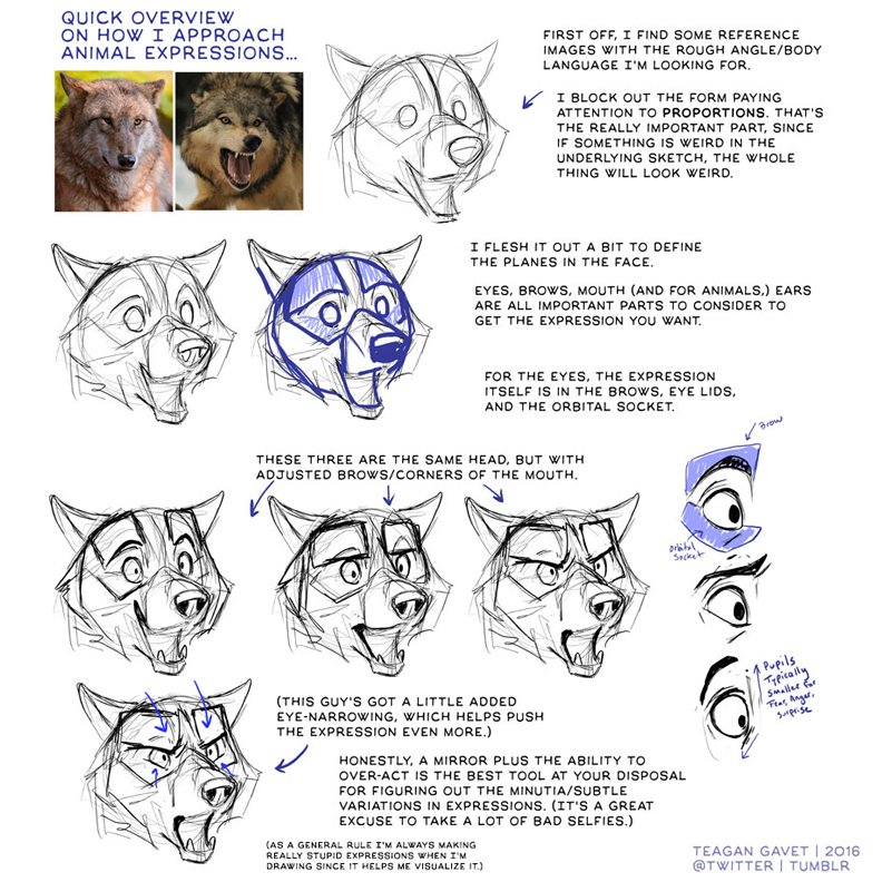 Our feature tutorial/artist for #FridayFundamentals today is this BEAUTY by the brilliant @teagangavet! So useful! #howtodraw #drawingtutorial #conceptart #gamedev #animationdev #gameart #tutorial #indiegame #comicart #wolves #wolf https://t.co/FHBsjyQoHb