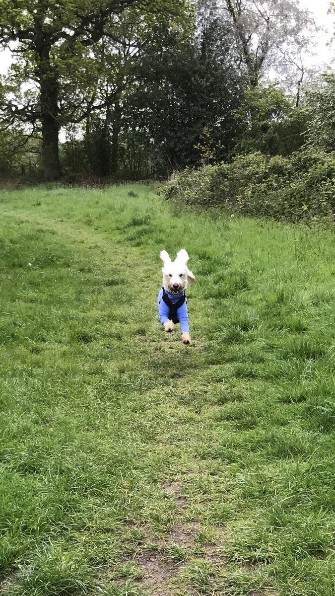 test Twitter Media - Daisy the flying school dog. @willowsvets https://t.co/EJZIQdYz9F