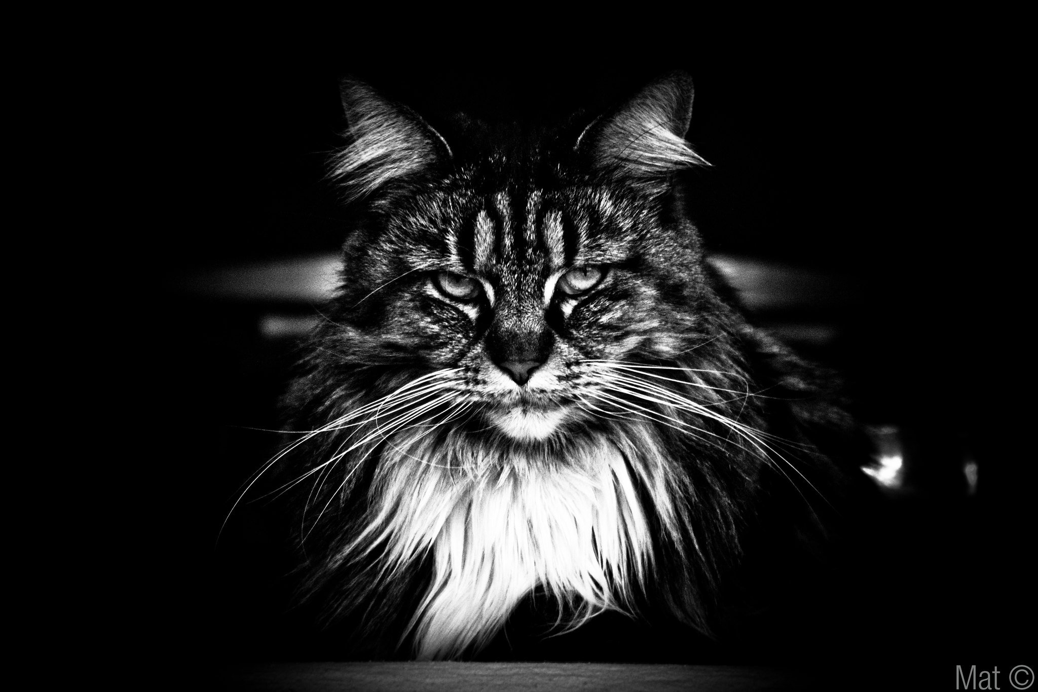 RT @evilbmcats: No greater meaning. No higher truth. No blissful being. Just darkness. https://t.co/KGxGBBmdfC