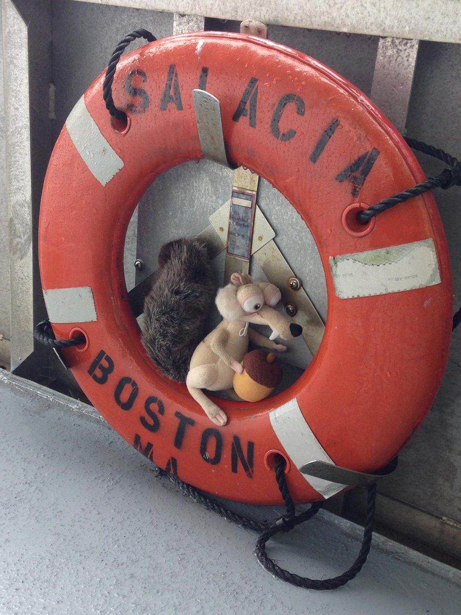 test Twitter Media - #inta2019 #FollowtheAcorn #Boston  stowaway on board https://t.co/1OCZ7nXxn1