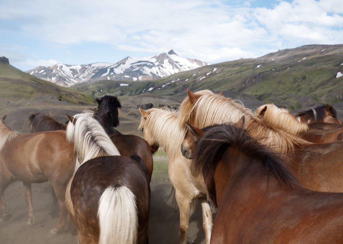test Twitter Media - Faktalink light om #Island der er berømt for sin natur med vulkaner, gletsjere og gejsere og heste ... https://t.co/VFw0GXKb8a @BoerneBibliotek #skolechat #skoleliv https://t.co/gH9Eu6pdlZ