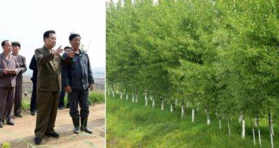 test Twitter Media - Choe Ryong Hae cannot get enough of the Poplar saplings in Jungsan County, South Phyongan #NorthKorea https://t.co/lIDbkLcdsD https://t.co/gPRaijAYVW