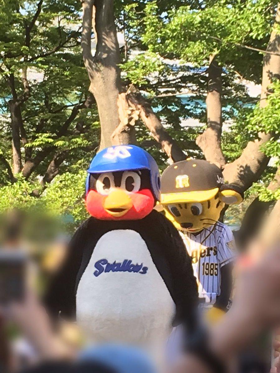 test ツイッターメディア - 昨日の阪神対ヤクルト戦観に甲子園に。 引きこもりの息子と一緒に。笑 あいらぶわんこはお留守番。 なかなか接戦で良い試合であった。 新庄剛志君が阪神に関わってたら、阪神もめっちゃ応援するんだけどなぁ〜 関西人だけど、つば九郎の為にヤクルト寄りです。笑 https://t.co/bhrYrxfZJb