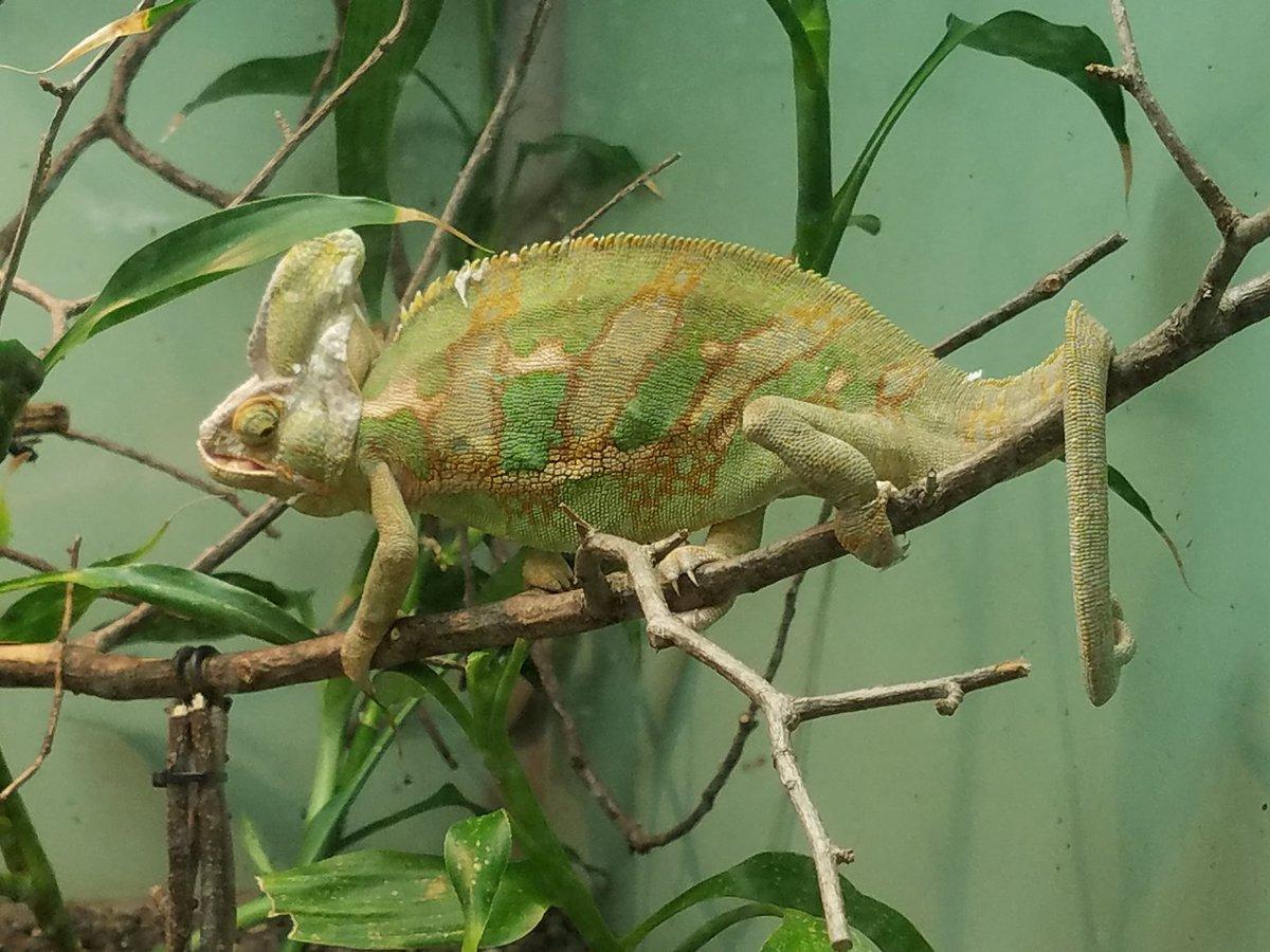 test ツイッターメディア - 本日はVagu友さんにオススメしてもらった東山動植物園に行ってきました。 想像以上に爬虫類両生類が豊富!可愛い子がいっぱいで癒しの時間を過ごしてきました💕 ちなみに日差しに負けたので屋外の哺乳類はほぼ見てません。 https://t.co/y8hO1zHZ6B