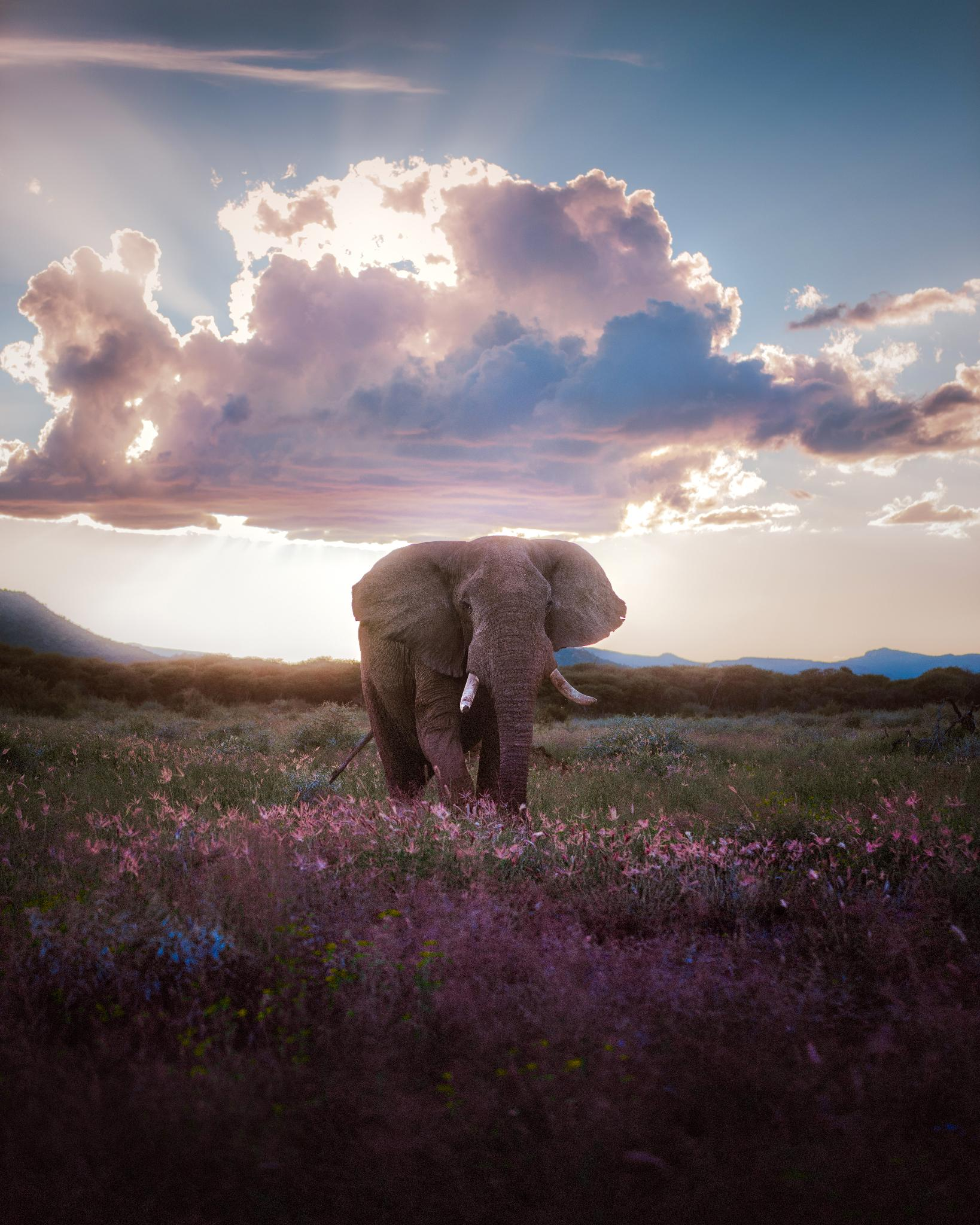 """""""Yet without even looking, I happened to find him."""" 🐘  📸 + caption by Paul Hänninen https://t.co/BavH1XdGv5"""