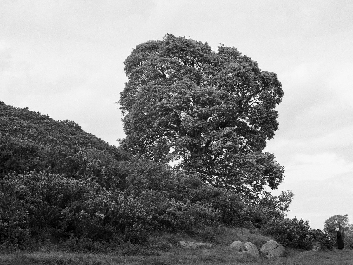 The Tree #Ireland #dowth #bronica #mediumformat #blackandwhitephotography #Ilford https://t.co/qAbcWpC6ey
