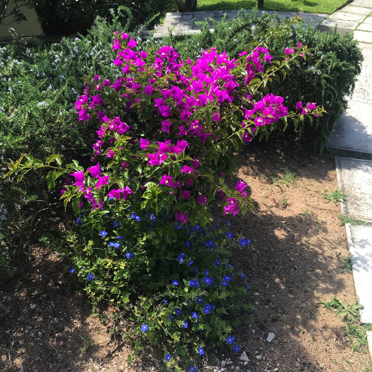 Lovely colorful flowers & foliage all over #Bermuda https://t.co/oPHPCMZ5VT
