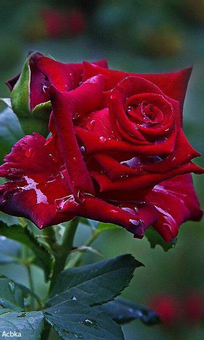 Wishing you  a very happy Birthday Gadkari ji. May you live long and healthy life.