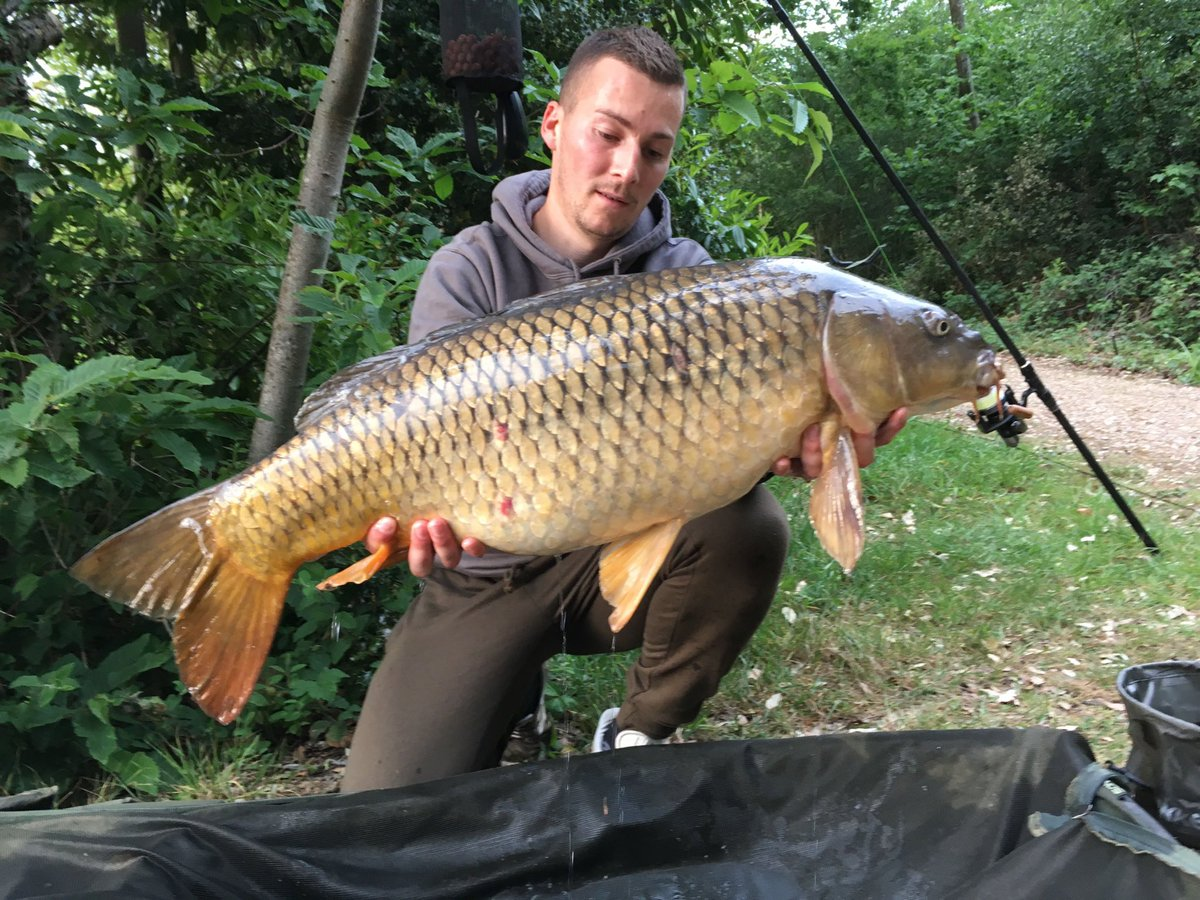 ELEVEN 11! A few of a great session... ud83cudfa3 #carpfishing https://t.co/XJfFBZJED2
