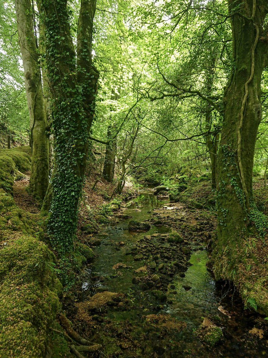 test Twitter Media - A babbling brook, near #Harford, passes under a lush green canopy of trees that enjoys sunshine from above and a constant supply of water underneath. #Dartmoor #Ivybridge #Woods #Trees #Stream #Photography https://t.co/190rFIZNMp