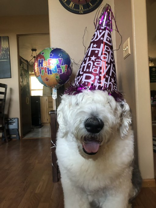 I let Maxwell know it s Lucy s B-Day.. HAPPY BIRTHDAY LUCY!!