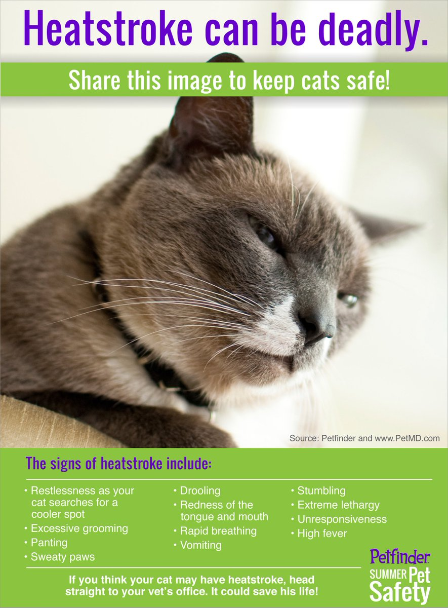 #DYK - Cats are at risk for heat stroke, too! #vieravet https://t.co/lhLkwlUNRA