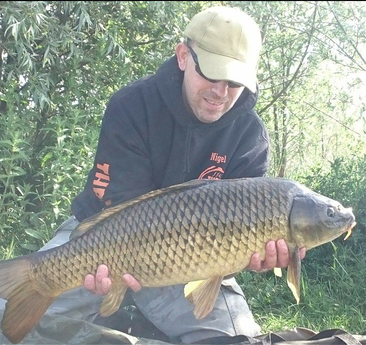 Another beauty to Thripster Shellfish Pro+. Sure didn't want to come in, great fighter 💪  #carpfi