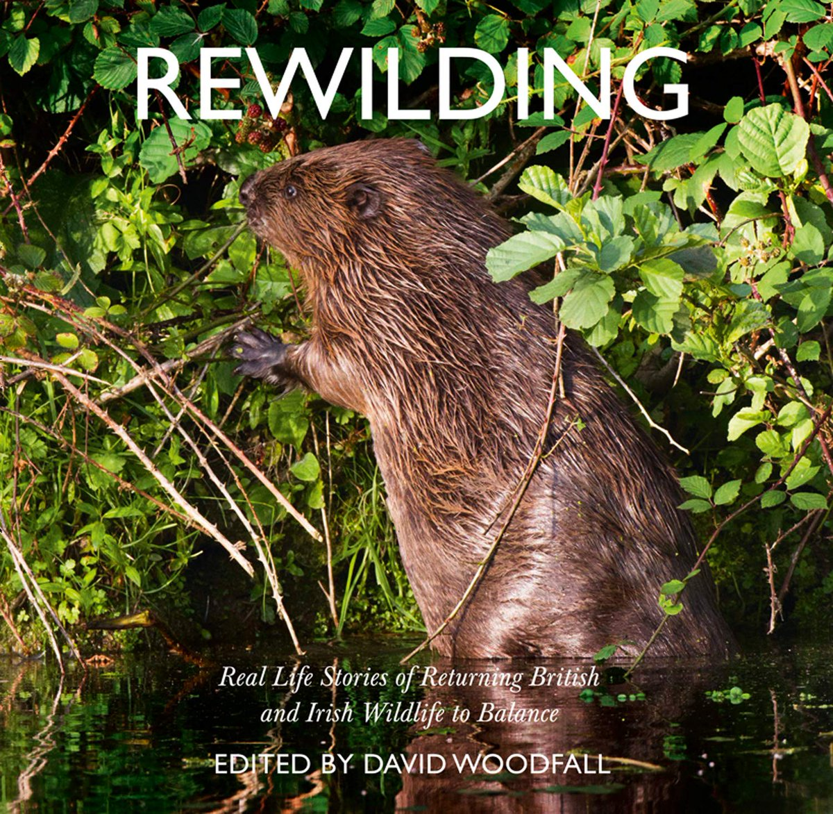 Image for Celebrate #WorldEnvironmentDay by booking your ticket for 'Rewilding: An Illustrated Talk with Original Music' which is happening this Friday 7th June at 7pm.  Only £16 adults £12 under 16s and includes tasty supper! #RealMidWales #event #Rewild #photography #music #Powys #Wales https://t.co/iX6pm2mXYs