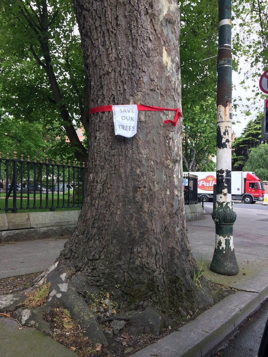 Don't remove our trees! https://t.co/4hxEyNW2HI https://t.co/6C53cYHEaL