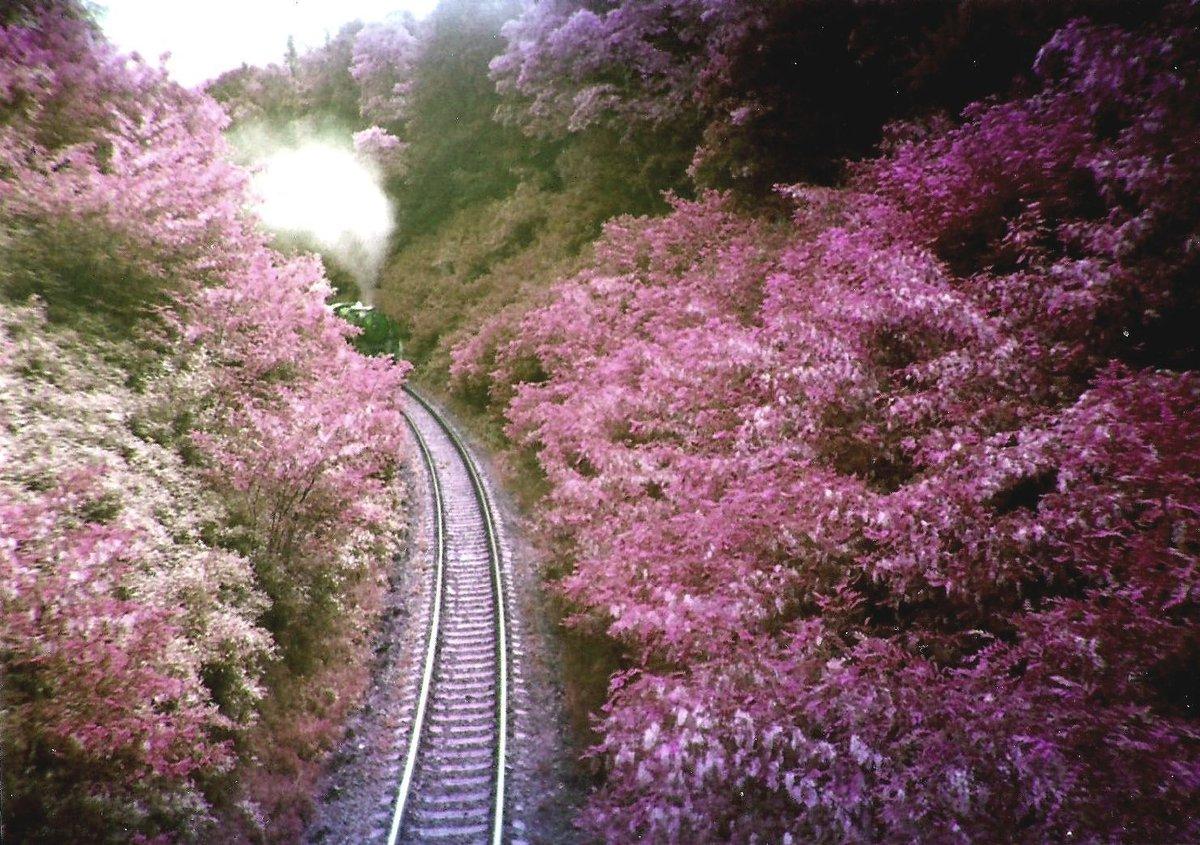 Sweetest looking train track I've seen in a while.. https://t.co/lOsY7xKcOb https://t.co/ZaRiIBrDjH