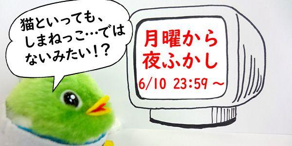test ツイッターメディア - 鳥取に現れる怪しい #猫!? 今夜の「月曜から夜ふかし」に鳥取の話題が出るんだって!日本テレビ系で夜11時59分から放送だよ☆https://t.co/mftsh55SSb https://t.co/0n6N6I6wL7