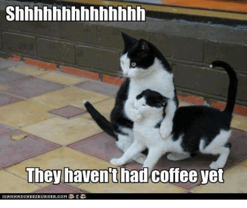 No talking until the coffee kicks in! Happy Monday!! #vieravet #Monday https://t.co/F0R3dQJSGU