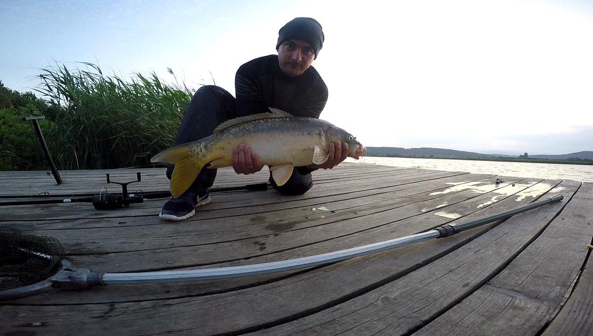 #carpfishing #carp #fishing #<b>Fishingwissunny</b> #bigfish #u0440u044bu0431u0430u043bu043au0430 #u